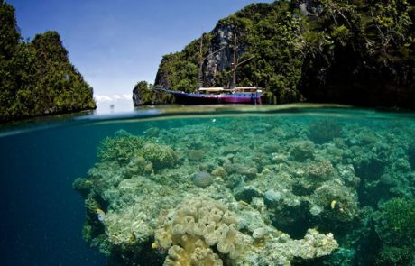 Raja Ampat to KOmodo diving expedition